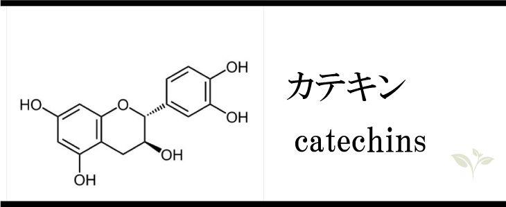 catechins-b1